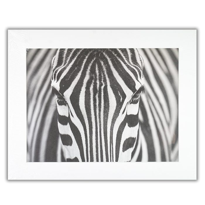 Zepra Fotograf: Hesham Alhumaid En närbild av en zebras huvud taget rakt framifrån