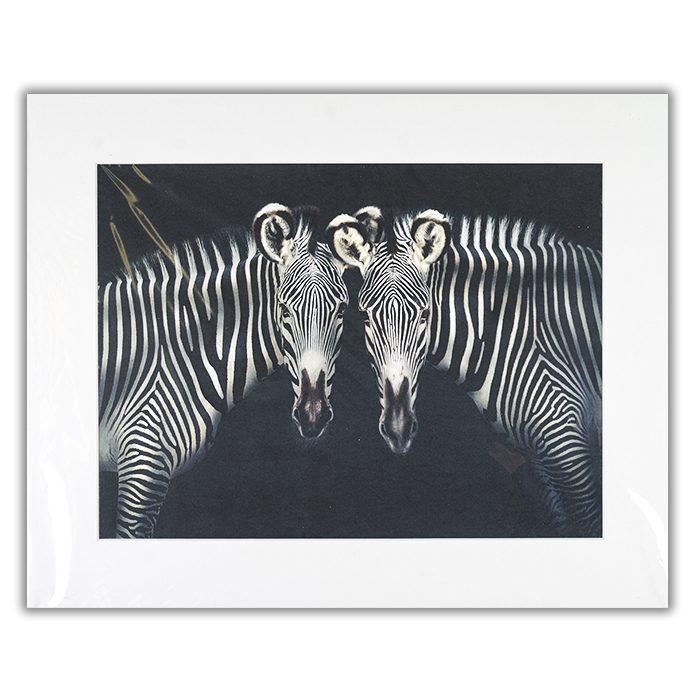 Double trouble Fotograf: Pedro Jarque Ett foto av trå zebror som står med huvudet emot varandra och tittar rakt in i kameran.
