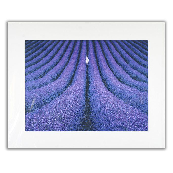 SHE Lluis de Haro Sanchez En person går i en fåra av ett fält fyllt med lila växter