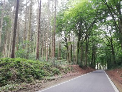 Fietsvakantie in eigen land - Limburgs bos