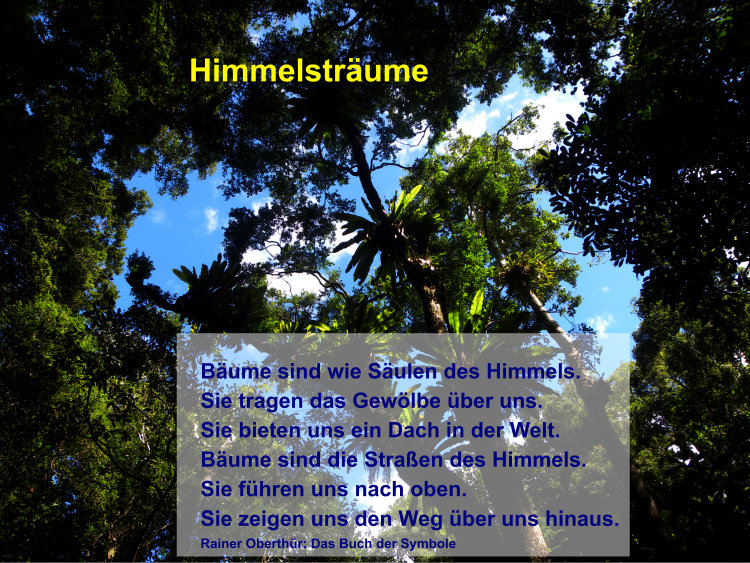 Himmelsträume Bäume sind wie Säulen des Himmels. Sie tragen das Gewölbe über uns. Sie bieten uns ein Dach in der Welt. Bäume sind die Straßen des Himmels. Sie führen uns nach oben. Sie zeigen uns den Weg über uns hinaus.Rainer Oberthür: Das Buch der Symbole