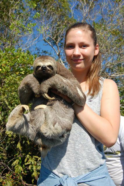 Sloth Amazonas
