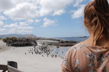 Pingvinkoloni i Sør-Afrika