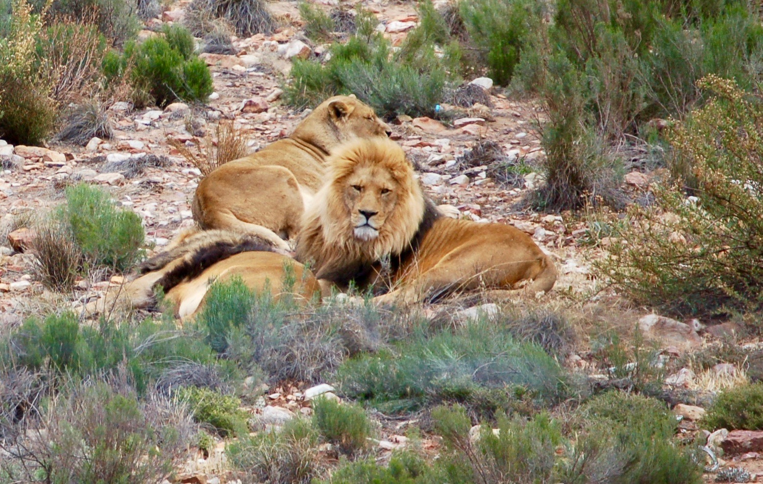 Safari, Aquila Reservations, Cape Town, South Africa