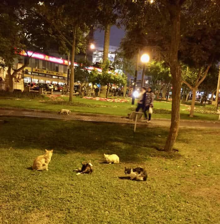 Kennedy park_Lima