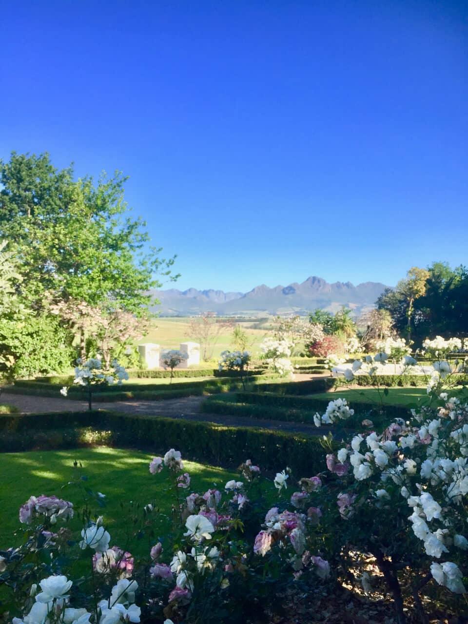 Stellenboch, vingårder