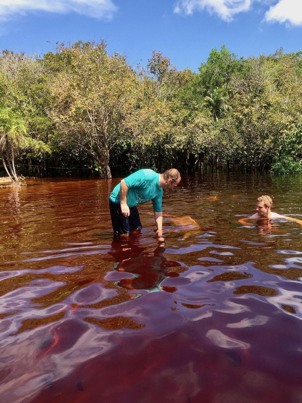 Delfiner i Amazonas river