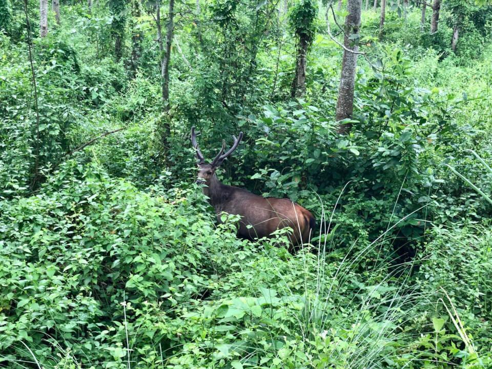Chitwan, med Tigerland Safari Resort