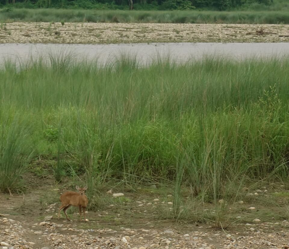 Chitwan. Med Tigerland Safari Resort
