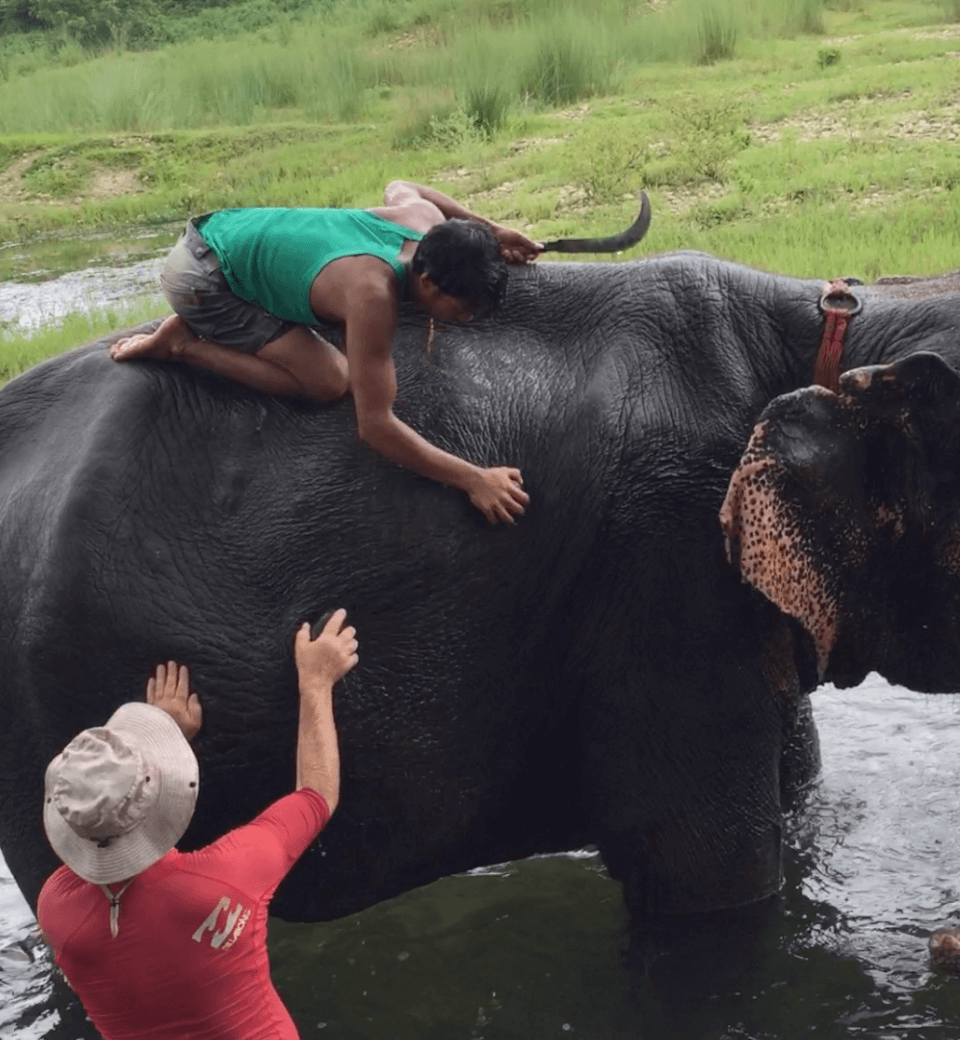 Elefantbading. Tigerland Safari Resort