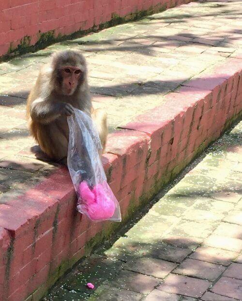 Monkey temple, Kathmandu i Nepal