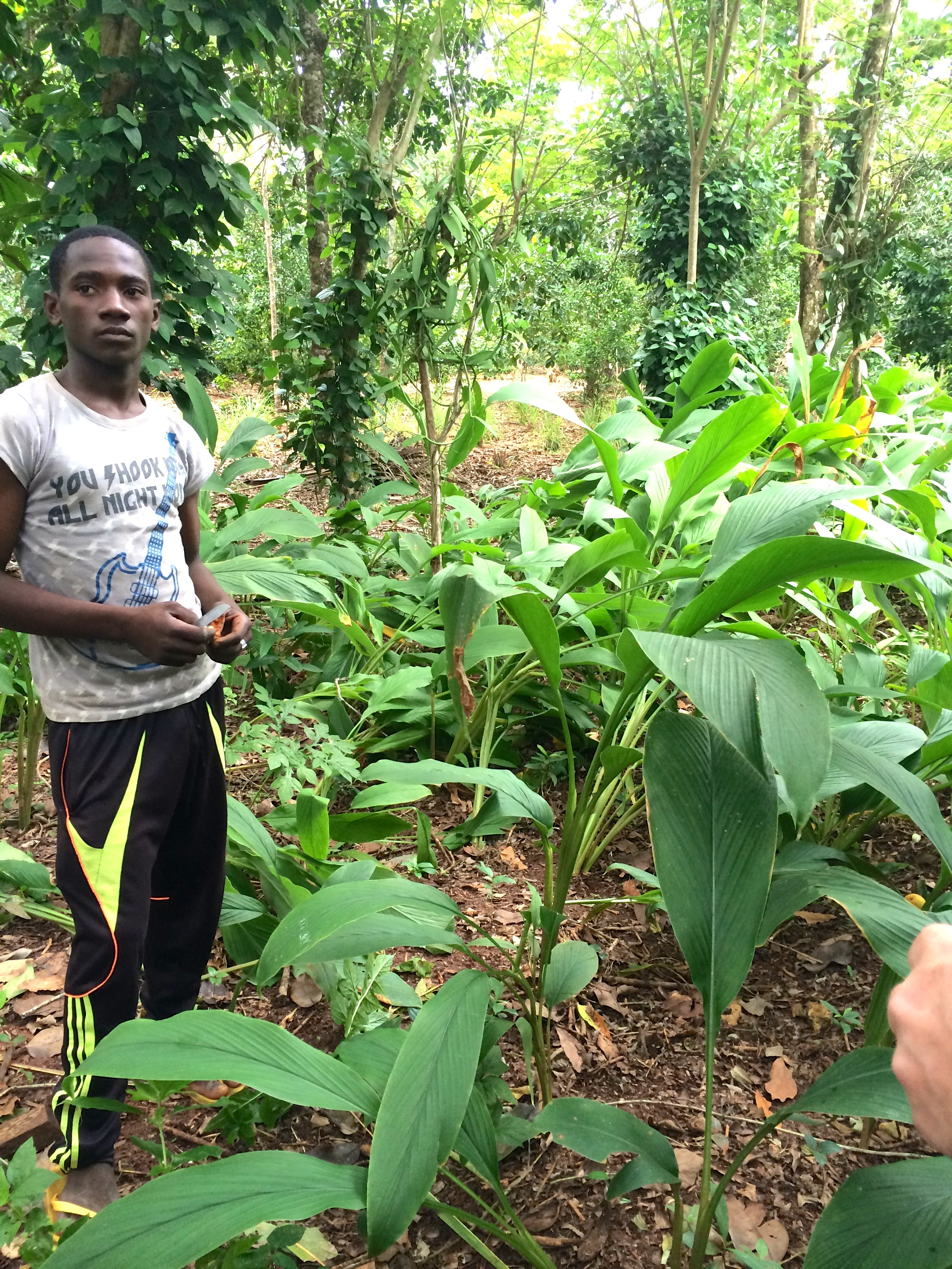 Krydderplantasjebesøk på Zanzibar