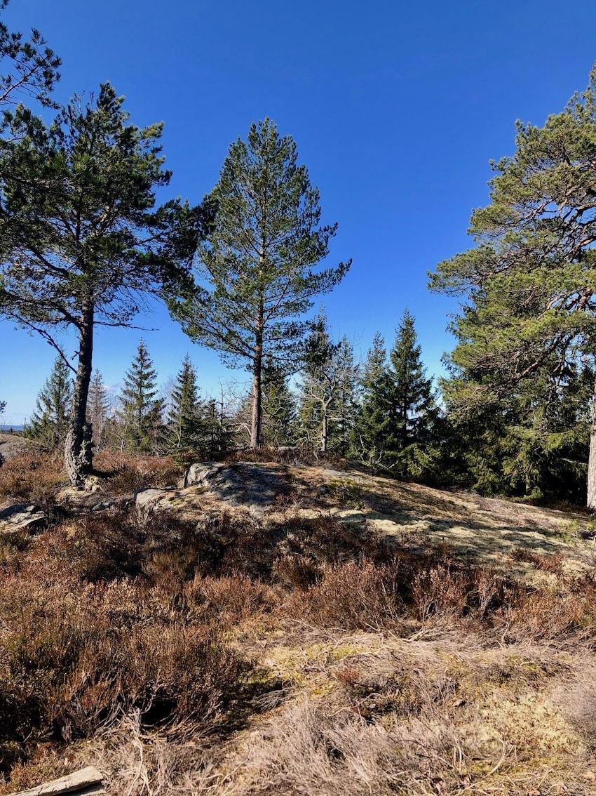 Lørenskogs høyeste topp, Svartåsen