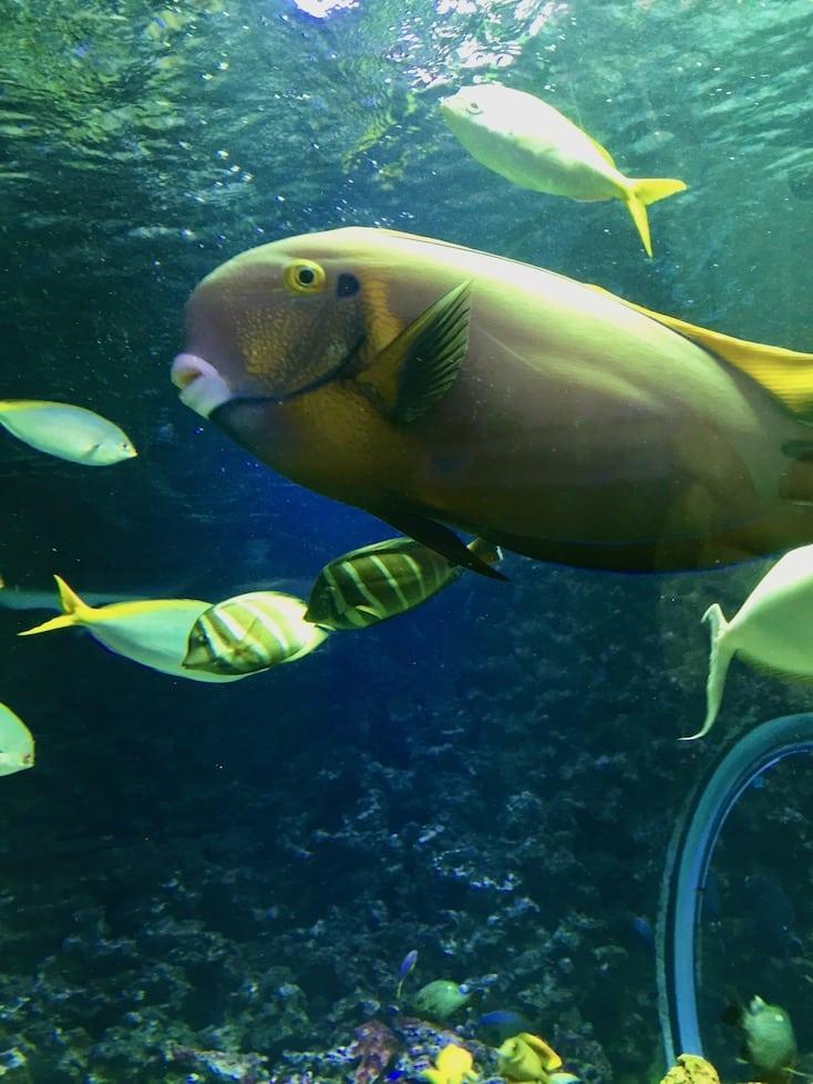Akvariet i bergen. Opplevelser i Bergen.