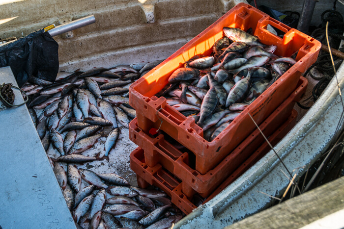 hindoe-fiskeri