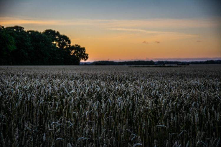 hjarnoe-solnedgang