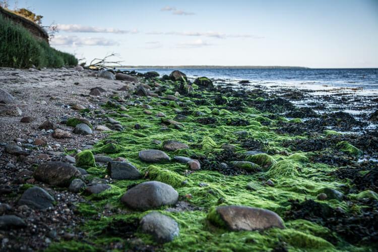 hjarnoe-hougaard-strand