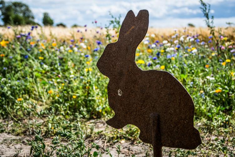 endelave-kaninier