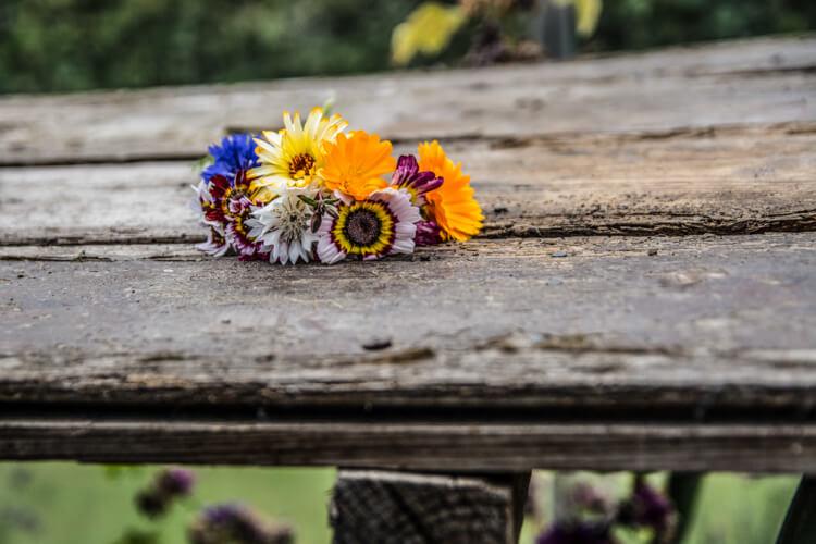 endelave-plukselv-blomster