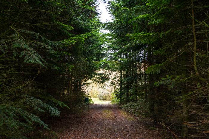 lilleoe-skov
