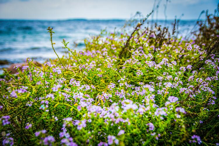 bjoernoe-blomster