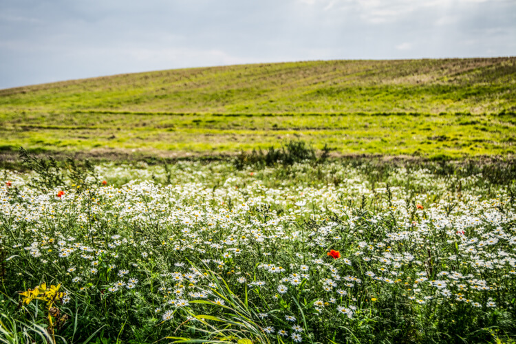 bjoernoe-blomstermark