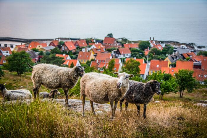 bornholm-gudhjem-bokul