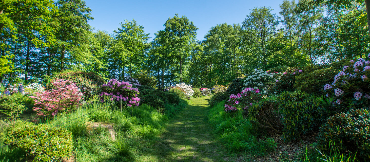 rododendron-nivaagaard-haven