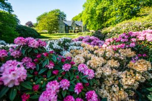 Rododendron have