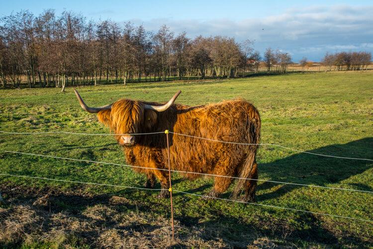 omoe-bisonokse