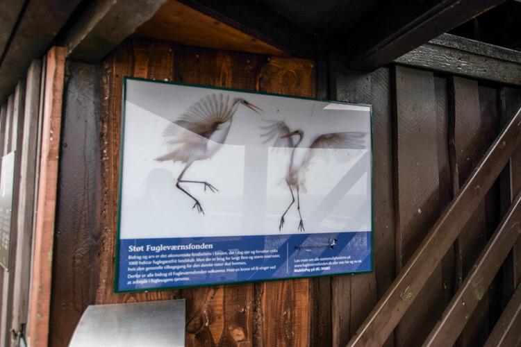 nyord-fugle