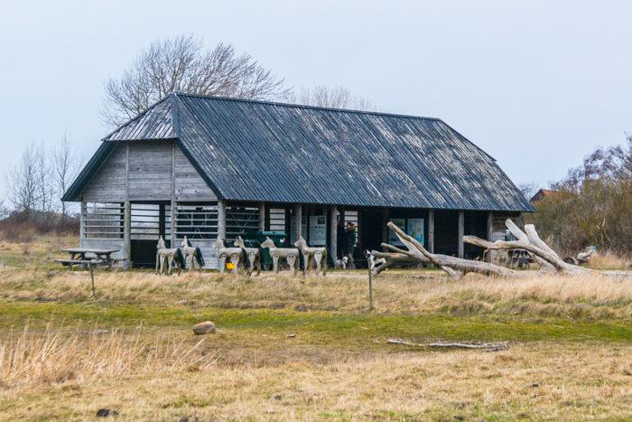 langeland-lade-vilde-heste