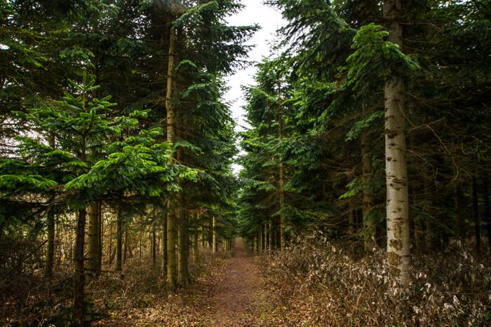 langeland-skov