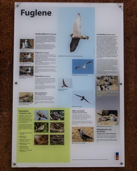 fugle-vang-granitbrud-bornholm