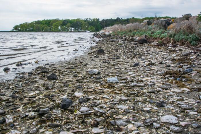eskilsoe-oesters