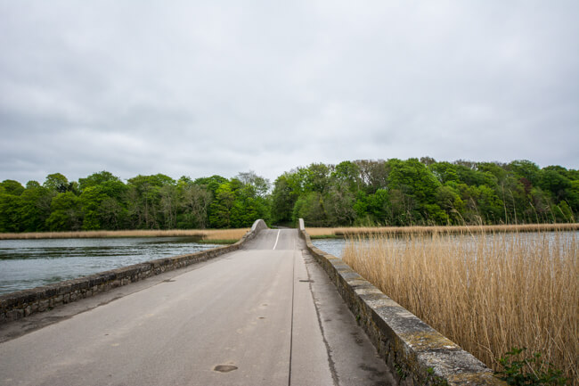 gavnoe-bro