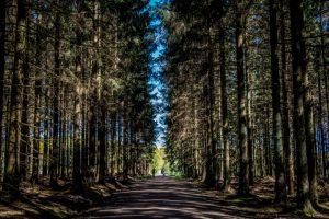 Almindingen – Bornholms største skov