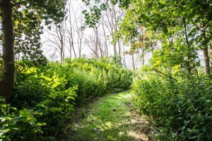 Forslag til Danmarks nye naturnationalparker