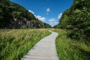 Ekkodalens plankebro – Bornholm