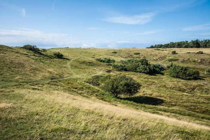 heatherhill-moraene-bakker