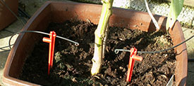 Why drip irrigation is better