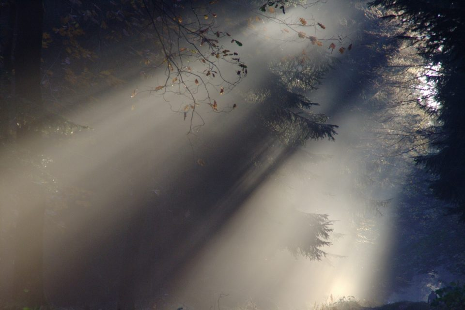 sunlight-fog-transparency