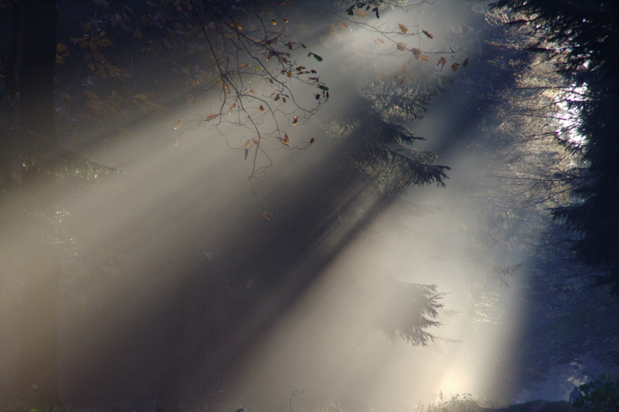 sunlight-fog-transparency
