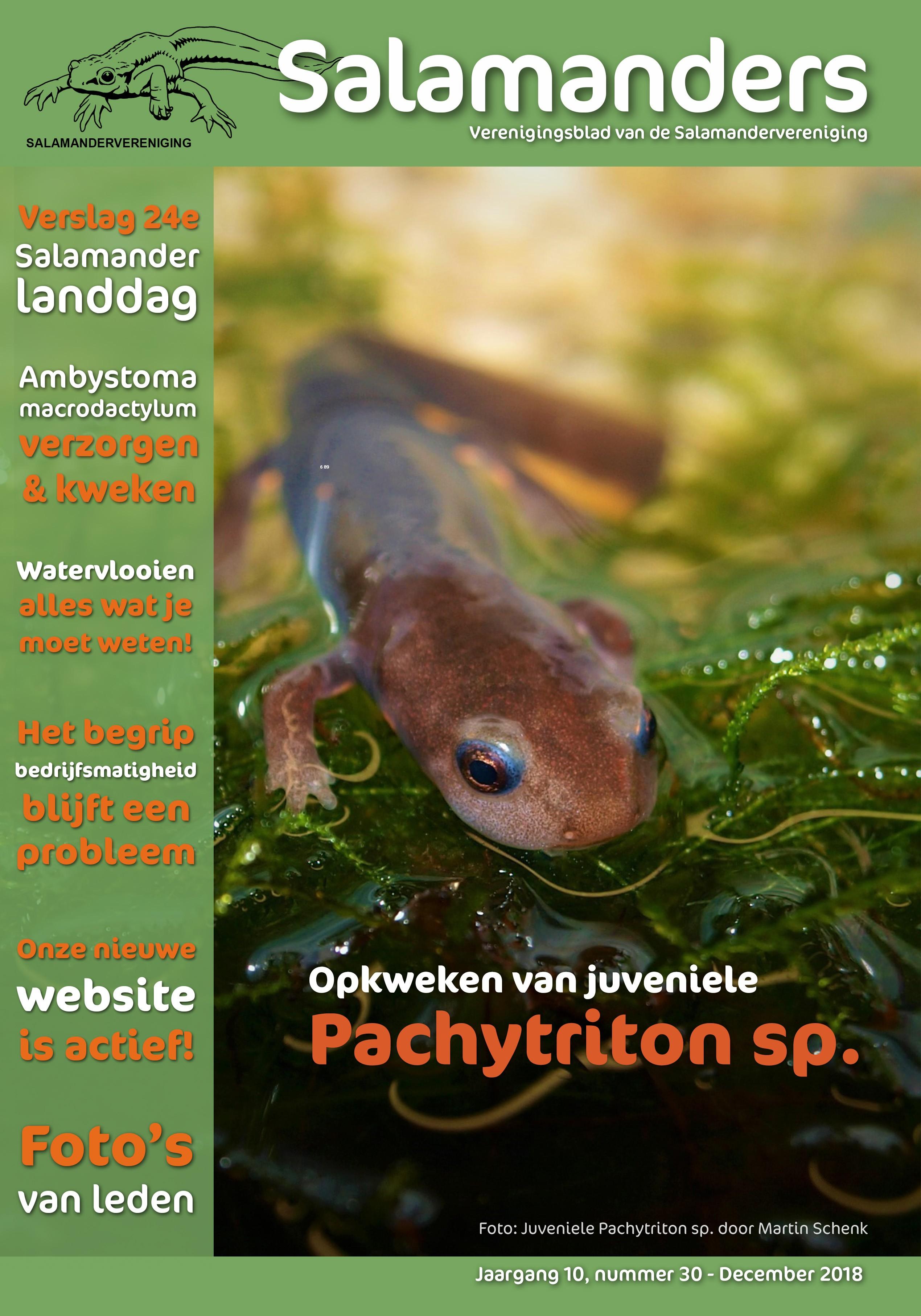 Salamanders Nummer 30