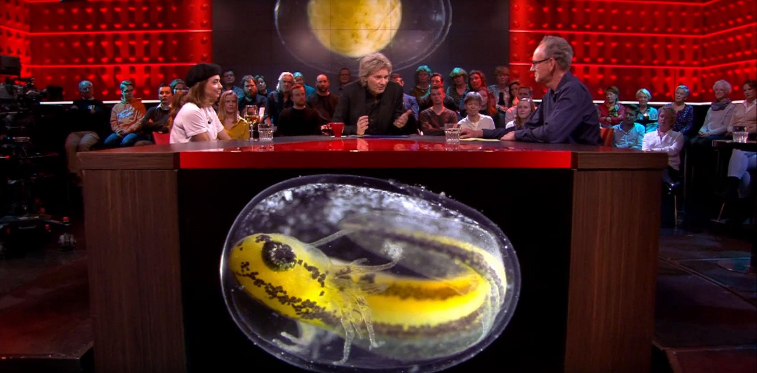 Salamanderfilm Jan Van IJken Gaat Viral, O.a. Te Zien Bij DWDD