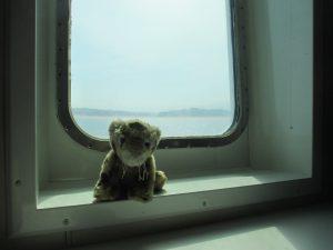 Cat on ferry