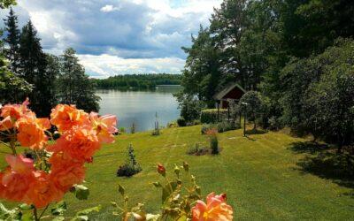 Torparträdgårdens rosor