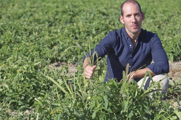 Agricultura de precisión contra las malas hierbas