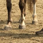 Trainingspsychologie van het paard