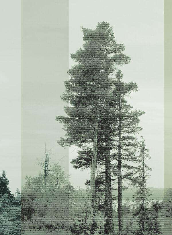 Panorama-Bluegreen-Dark-T